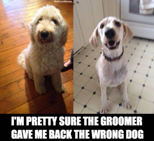 it's the wrong dog