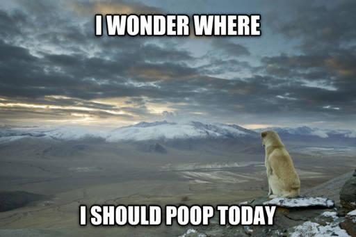 Dog wondering where to poop