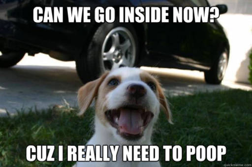 Dog wants to go back inside to poop