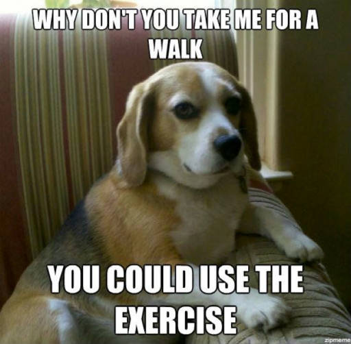 Take me for a walk. You could use the exercise.