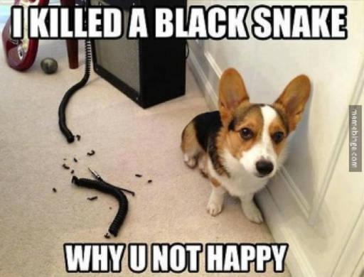 Dog chewed a cord