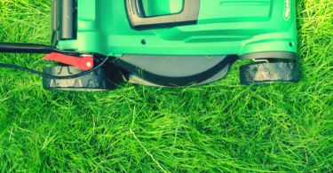 Lawn Care While Renting